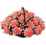 12 Orange Carnations