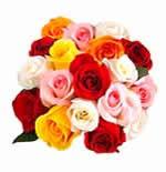 18 Multicolour Roses
