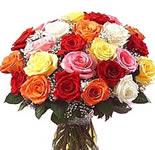24 Multicolour Roses
