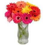 12 Gerberas in a Vase