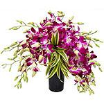 Sensation Orchids