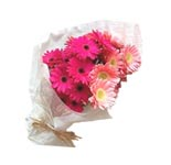 20 pink & peach gerbera bunch